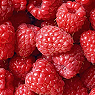 Fresh Raspberries Available from TPS Fruit and Veg, Wholesale Suppliers in Aberdeenshire and Moray of Fresh Fruit and Vegetable