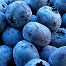 Blueberries Available from TPS Fruit and Veg, Wholesale Suppliers in Aberdeenshire and Moray of Fresh Fruit and Vegetable