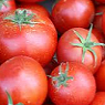 Fresh Tomatoes Available from TPS Fruit and Veg, Wholesale Suppliers in Aberdeenshire and Moray of Fresh Fruit and Vegetable