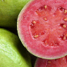 Guava Available from TPS Fruit and Veg, Wholesale Suppliers in Aberdeenshire and Moray of Fresh Fruit and Vegetable