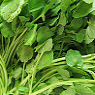 Water Cress Available from TPS Fruit and Veg, Wholesale Suppliers in Aberdeenshire and Moray of Fresh Fruit and Vegetable