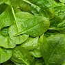 Fresh Spinach Available from TPS Fruit and Veg, Wholesale Suppliers in Aberdeenshire and Moray of Fresh Fruit and Vegetable